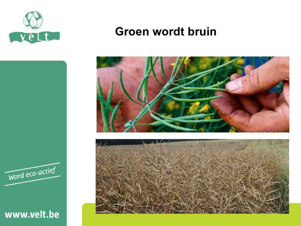 Groen wordt bruin