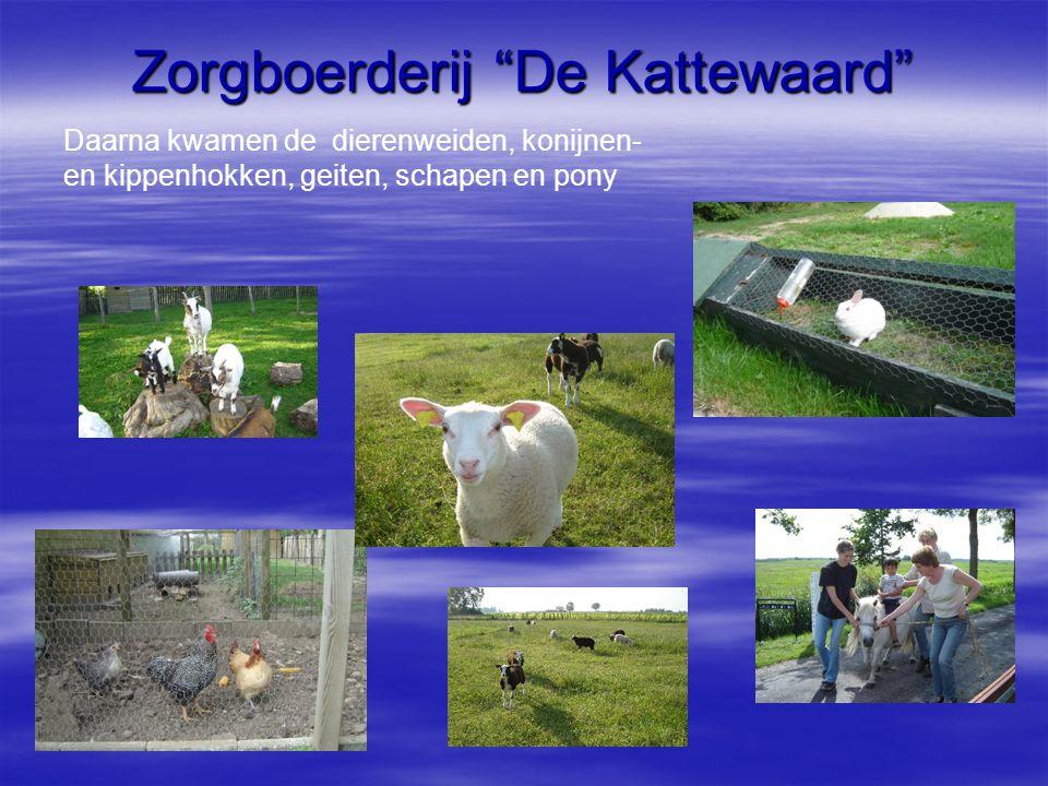 """Zorgboerderij """"De Kattewaard"""" Daarna kwamen de dierenweiden, konijnen- en kippenhokken, geiten, schapen en pony"""