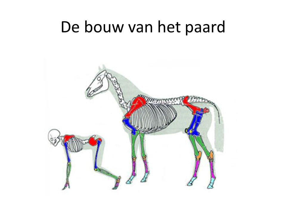 Uitingen van pijn zijn per paard verschillend.