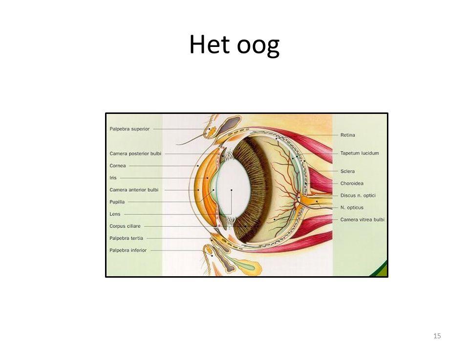 Het oog 15