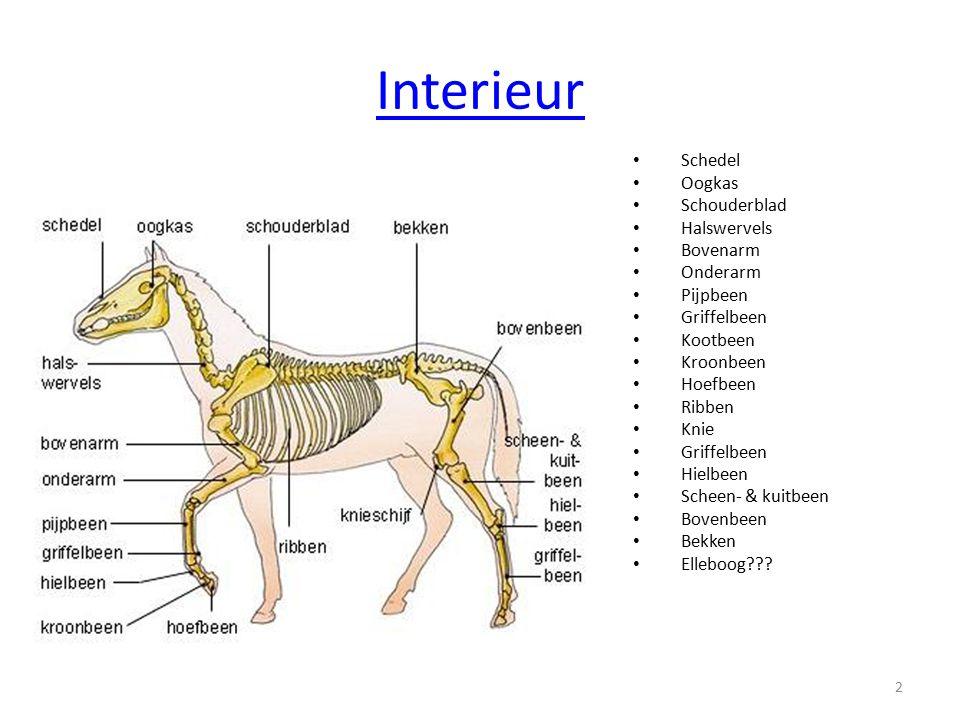 Domesticatie Domesticatie is het proces waarbij een dier tot huisdier wordt gemaakt.
