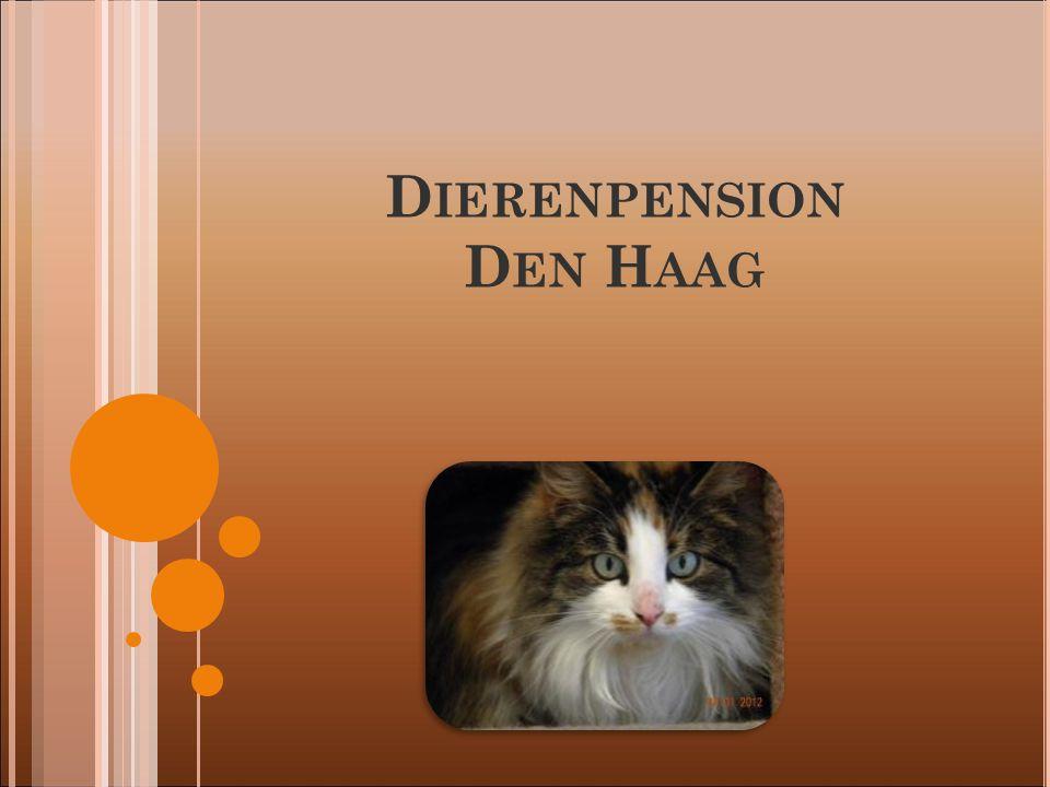 D IERENPENSION D EN H AAG
