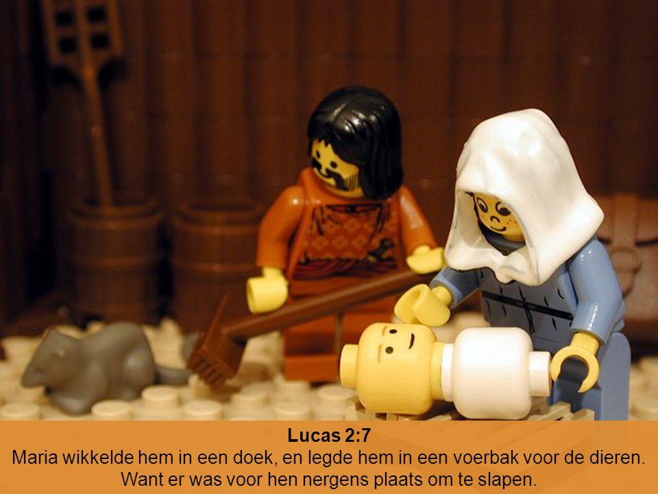 Lucas 2:7 Maria wikkelde hem in een doek, en legde hem in een voerbak voor de dieren. Want er was voor hen nergens plaats om te slapen.