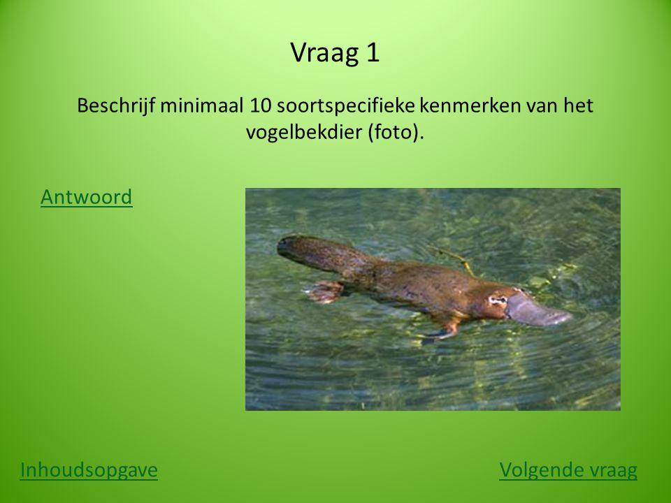 Vraag 1 Beschrijf minimaal 10 soortspecifieke kenmerken van het vogelbekdier (foto). Antwoord InhoudsopgaveVolgende vraag