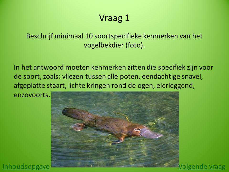 Vraag 1 Beschrijf minimaal 10 soortspecifieke kenmerken van het vogelbekdier (foto). In het antwoord moeten kenmerken zitten die specifiek zijn voor d