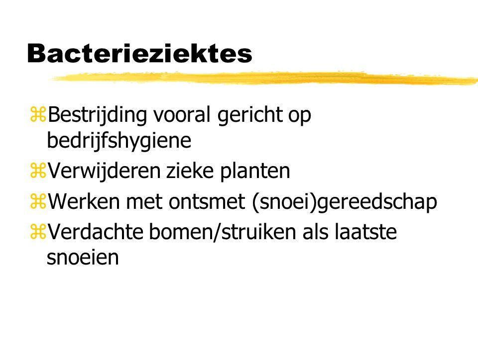 Bacterieziektes zBestrijding vooral gericht op bedrijfshygiene zVerwijderen zieke planten zWerken met ontsmet (snoei)gereedschap zVerdachte bomen/stru