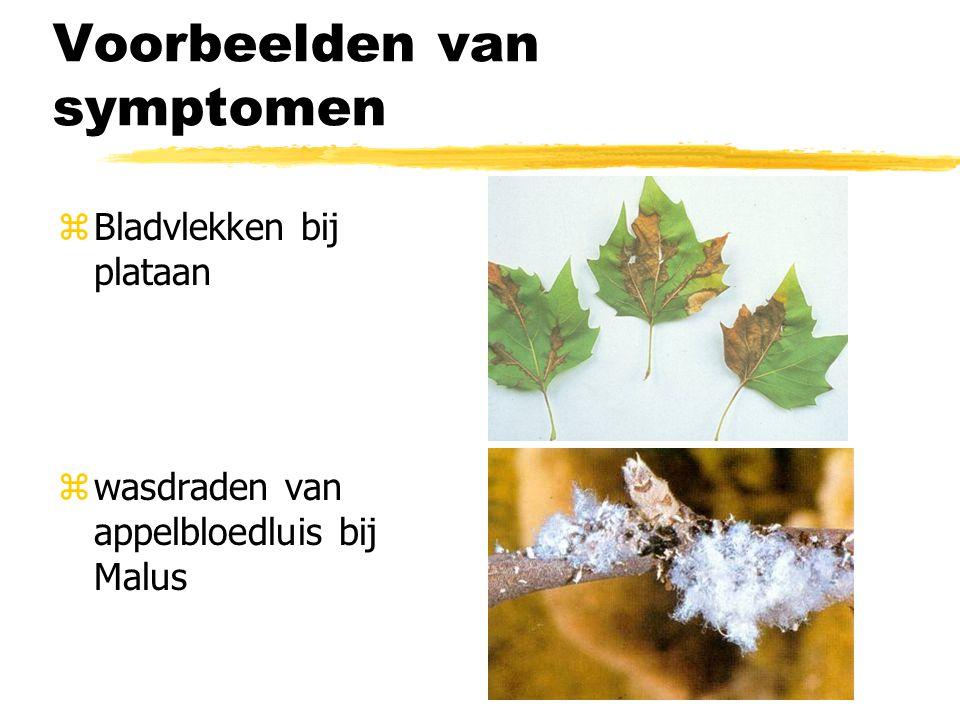 Voorbeelden van symptomen zBladvlekken bij plataan zwasdraden van appelbloedluis bij Malus