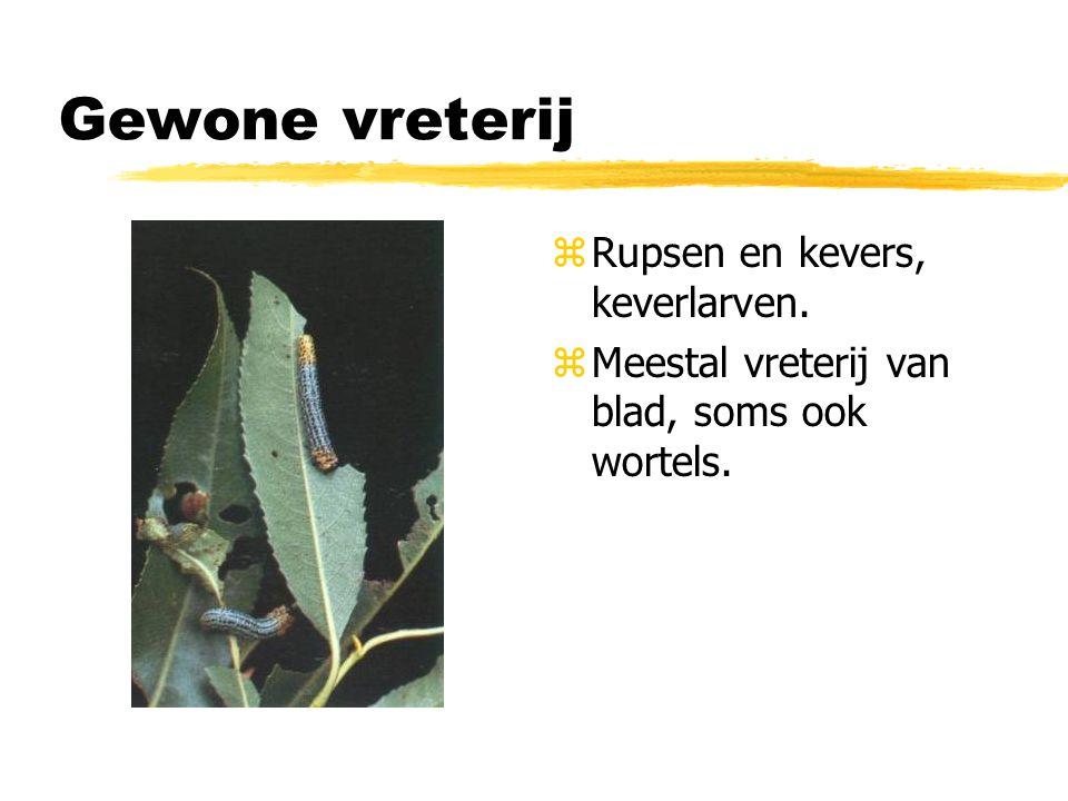 Gewone vreterij z Rupsen en kevers, keverlarven. z Meestal vreterij van blad, soms ook wortels.