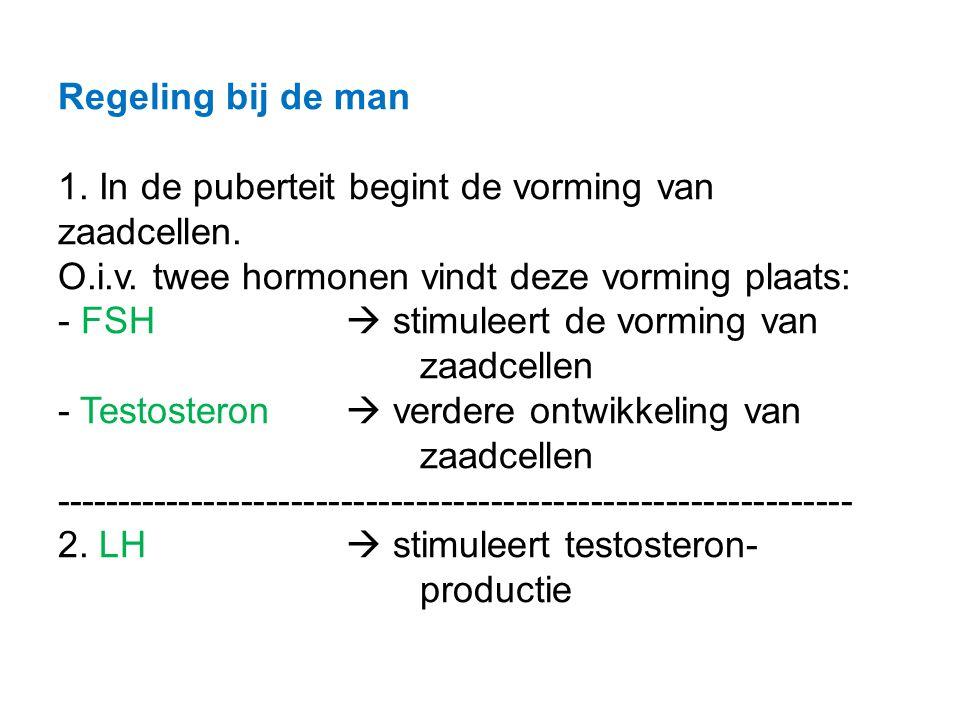 Regeling bij de man 1. In de puberteit begint de vorming van zaadcellen. O.i.v. twee hormonen vindt deze vorming plaats: - FSH  stimuleert de vorming