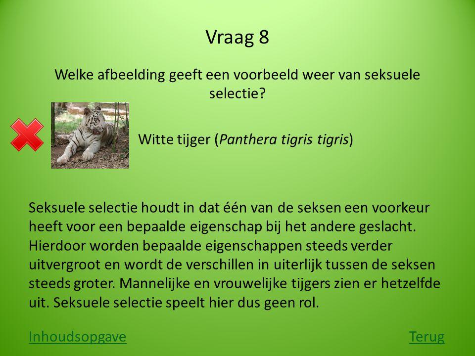 Vraag 8 Welke afbeelding geeft een voorbeeld weer van seksuele selectie? Witte tijger (Panthera tigris tigris) Seksuele selectie houdt in dat één van
