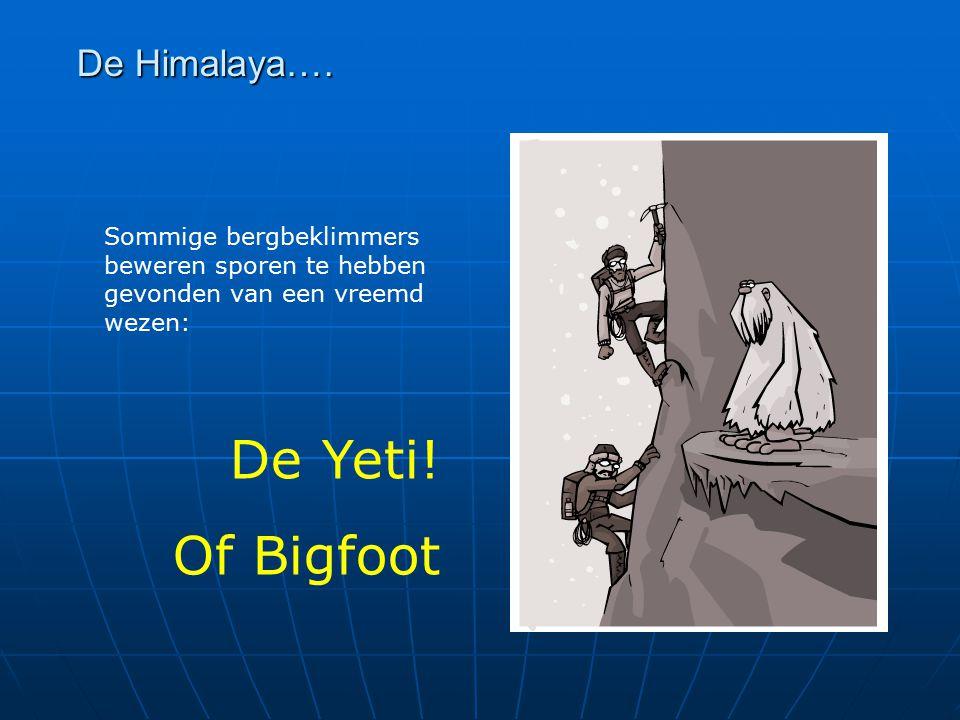 De Himalaya…. Sommige bergbeklimmers beweren sporen te hebben gevonden van een vreemd wezen: De Yeti! Of Bigfoot