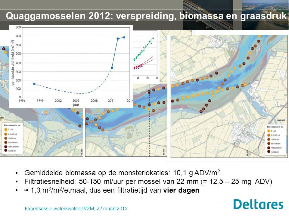 Quaggamosselen 2012: verspreiding, biomassa en graasdruk Expertsessie waterkwaliteit VZM, 22 maart 2013 Gemiddelde biomassa op de monsterlokaties: 10,