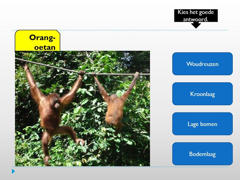 Woudreuzen Kroonlaag Lage bomen Bodemlaag Orang- oetan Kies het goede antwoord.