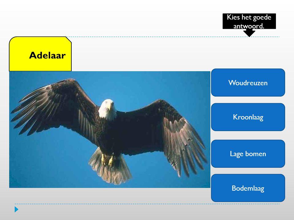 Woudreuzen Kroonlaag Lage bomen Bodemlaag Adelaar Kies het goede antwoord.