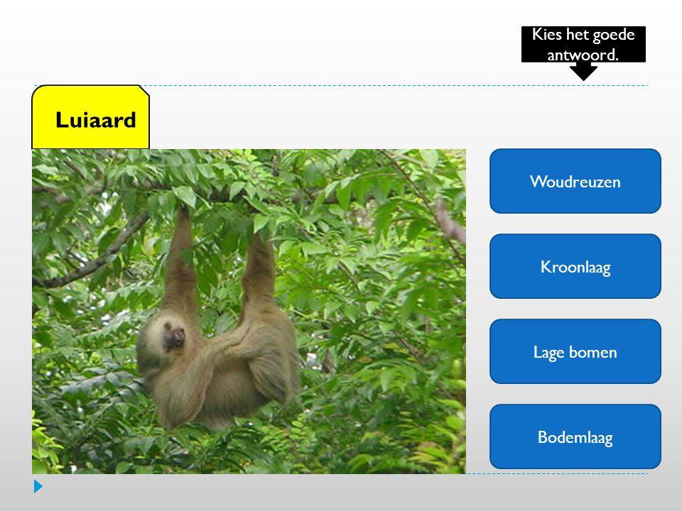 Woudreuzen Kroonlaag Lage bomen Bodemlaag Luiaard Kies het goede antwoord.