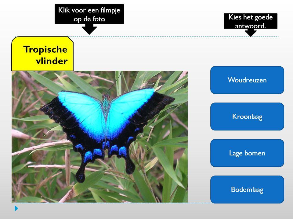 Woudreuzen Kroonlaag Lage bomen Bodemlaag Tropische vlinder Klik voor een filmpje op de foto Kies het goede antwoord.