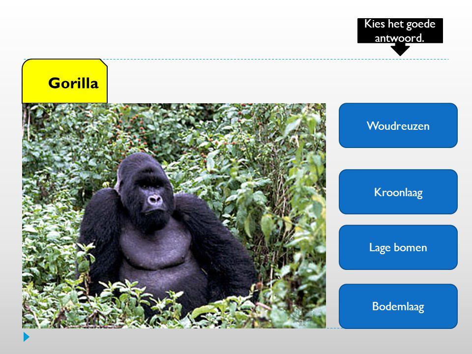 Woudreuzen Kroonlaag Lage bomen Bodemlaag Gorilla Kies het goede antwoord.