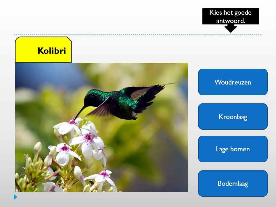 Woudreuzen Kroonlaag Lage bomen Bodemlaag Kolibri Kies het goede antwoord.