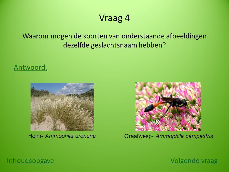 Vraag 4 Waarom mogen de soorten van onderstaande afbeeldingen dezelfde geslachtsnaam hebben.