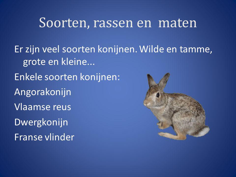 Soorten, rassen en maten Er zijn veel soorten konijnen. Wilde en tamme, grote en kleine... Enkele soorten konijnen: Angorakonijn Vlaamse reus Dwergkon