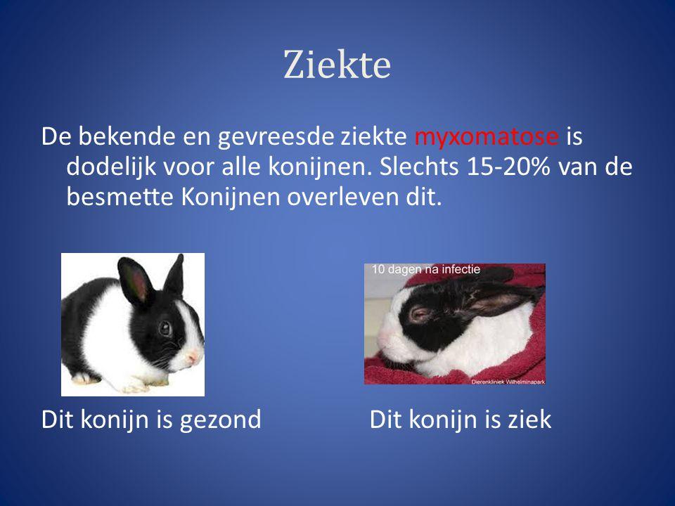 Ziekte De bekende en gevreesde ziekte myxomatose is dodelijk voor alle konijnen. Slechts 15-20% van de besmette Konijnen overleven dit. Dit konijn is
