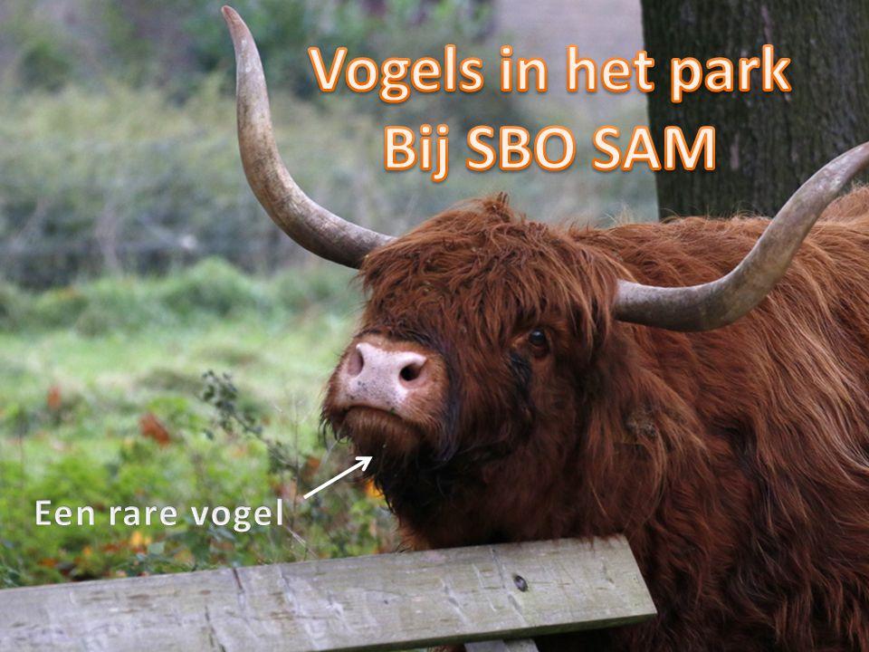 Deze powerpointpresentatie is vervaardigd door ' Wassink Natuurprojecten' en beschikbaar gesteld voor gebruik door SBO SAM te Doetinchem.