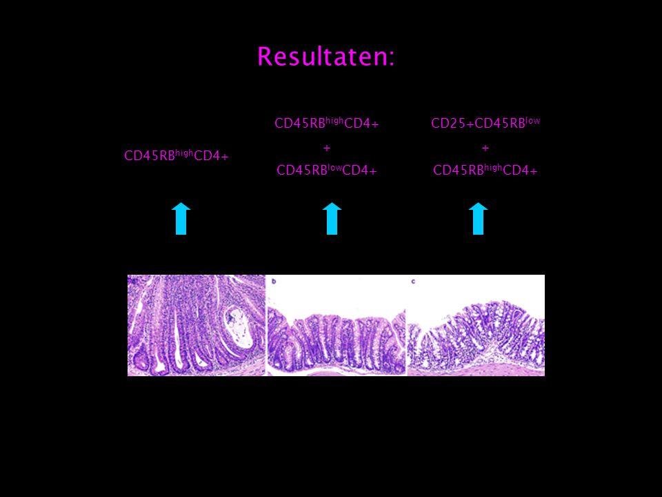 Resultaten: CD45RB high CD4+ CD25+CD45RB low + CD45RB high CD4+ + CD45RB low CD4+