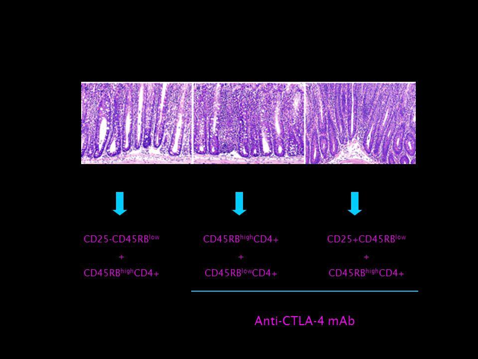 CD25-CD45RB low + CD45RB high CD4+ + CD45RB low CD4+ CD25+CD45RB low + CD45RB high CD4+ Anti-CTLA-4 mAb