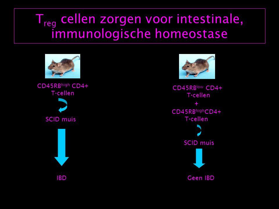 T reg cellen zorgen voor intestinale, immunologische homeostase CD45RB high CD4+ T-cellen CD45RB low CD4+ T-cellen + CD45RB high CD4+ T-cellen IBDGeen IBD SCID muis