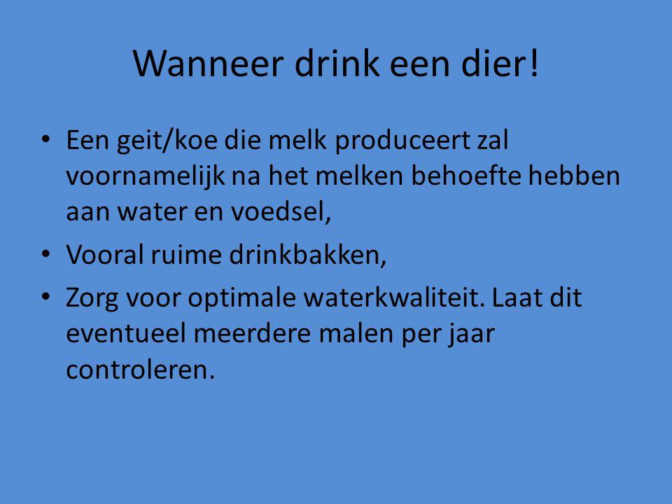 Wanneer drink een dier! Een geit/koe die melk produceert zal voornamelijk na het melken behoefte hebben aan water en voedsel, Vooral ruime drinkbakken