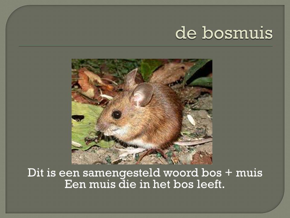 Dit is een samengesteld woord bos + muis Een muis die in het bos leeft.