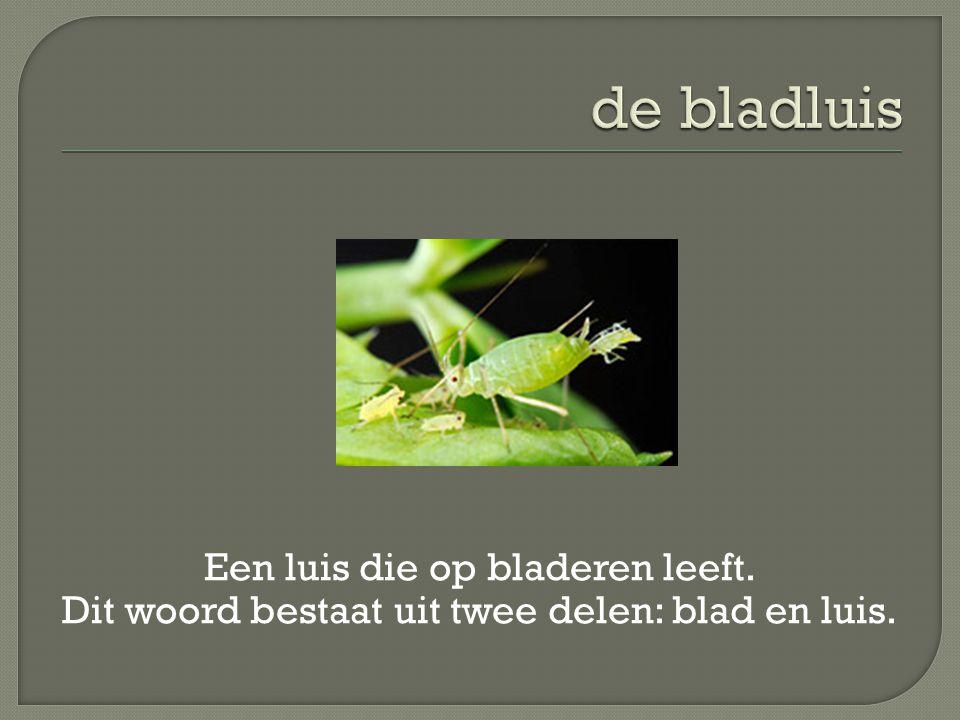 Een luis die op bladeren leeft. Dit woord bestaat uit twee delen: blad en luis.