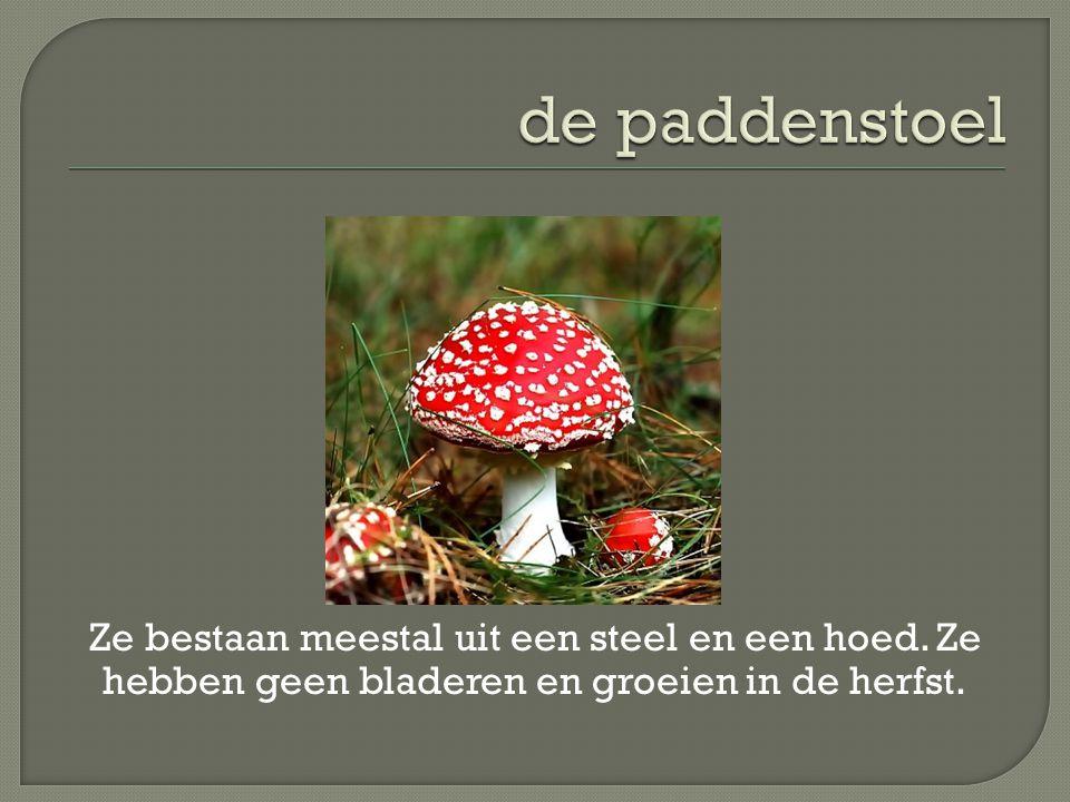 Ze bestaan meestal uit een steel en een hoed. Ze hebben geen bladeren en groeien in de herfst.