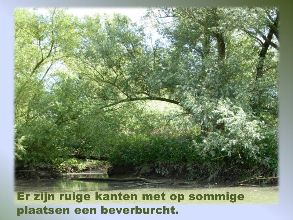 VAREN MET DE FLUISTERBOOT langs mooie plekjes en uitleg door de gids. Vertrek: Voor het bezoekerscentrum, Dordrecht