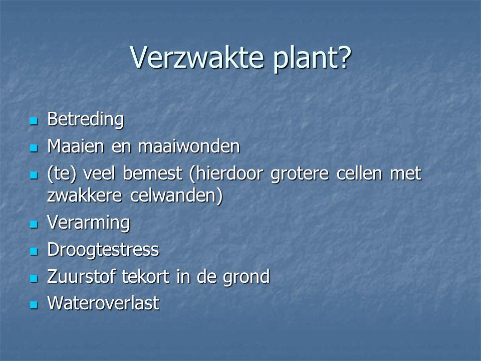 Verzwakte plant? Betreding Betreding Maaien en maaiwonden Maaien en maaiwonden (te) veel bemest (hierdoor grotere cellen met zwakkere celwanden) (te)