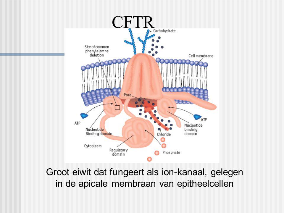 CFTR Groot eiwit dat fungeert als ion-kanaal, gelegen in de apicale membraan van epitheelcellen