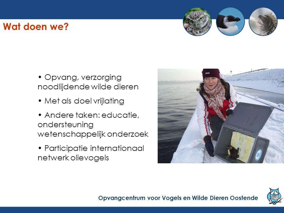 35% van de zeekoeten/alken (145) met olie gelost Problemen:- de helft van de gewassen dieren sterft - waterdichtheid op de zwembaden - ???, veel onbekende problemen Vooruitgang: goede wastechniek Opvangcentrum voor Vogels en Wilde Dieren Oostende Winter 2003-2004