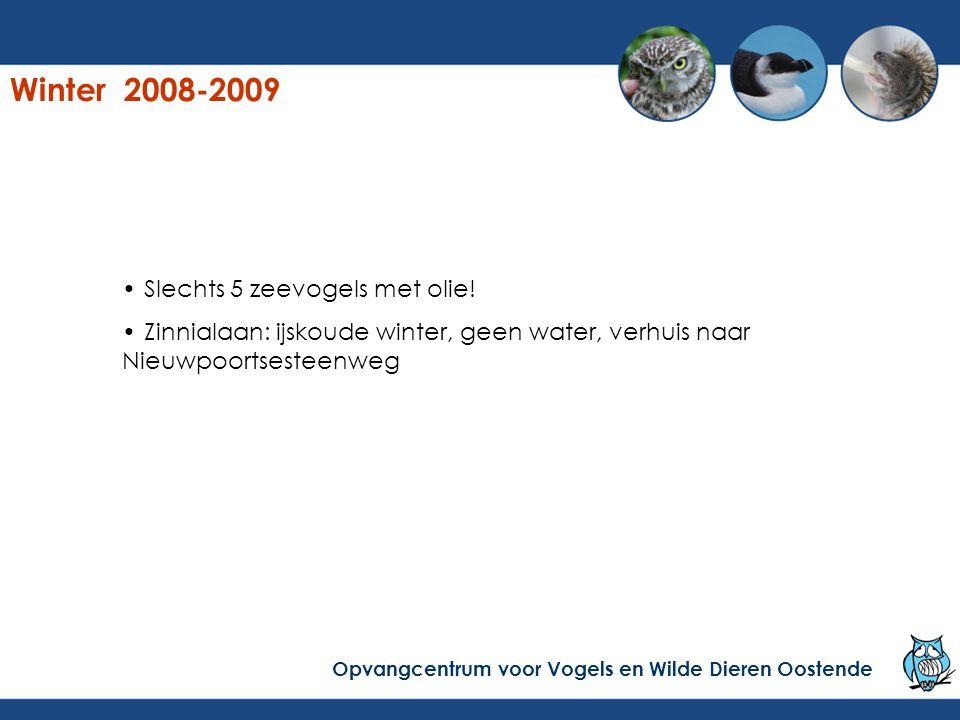 Winter 2008-2009 Slechts 5 zeevogels met olie! Zinnialaan: ijskoude winter, geen water, verhuis naar Nieuwpoortsesteenweg Opvangcentrum voor Vogels en
