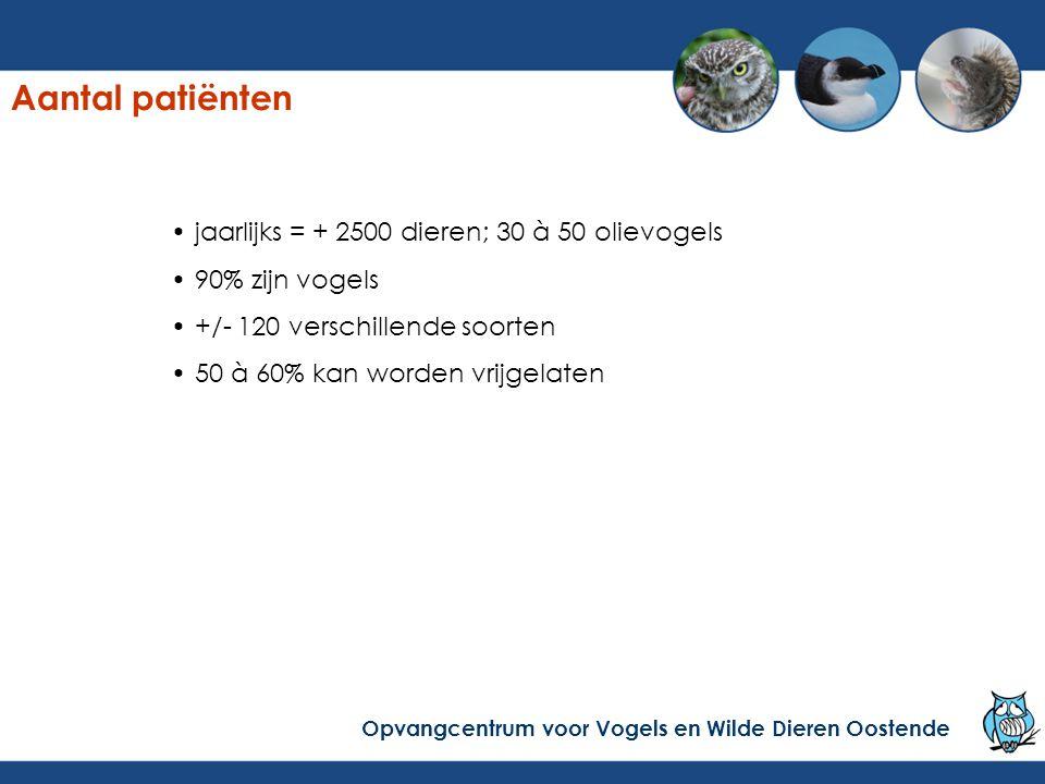 jaarlijks = + 2500 dieren; 30 à 50 olievogels 90% zijn vogels +/- 120 verschillende soorten 50 à 60% kan worden vrijgelaten Opvangcentrum voor Vogels