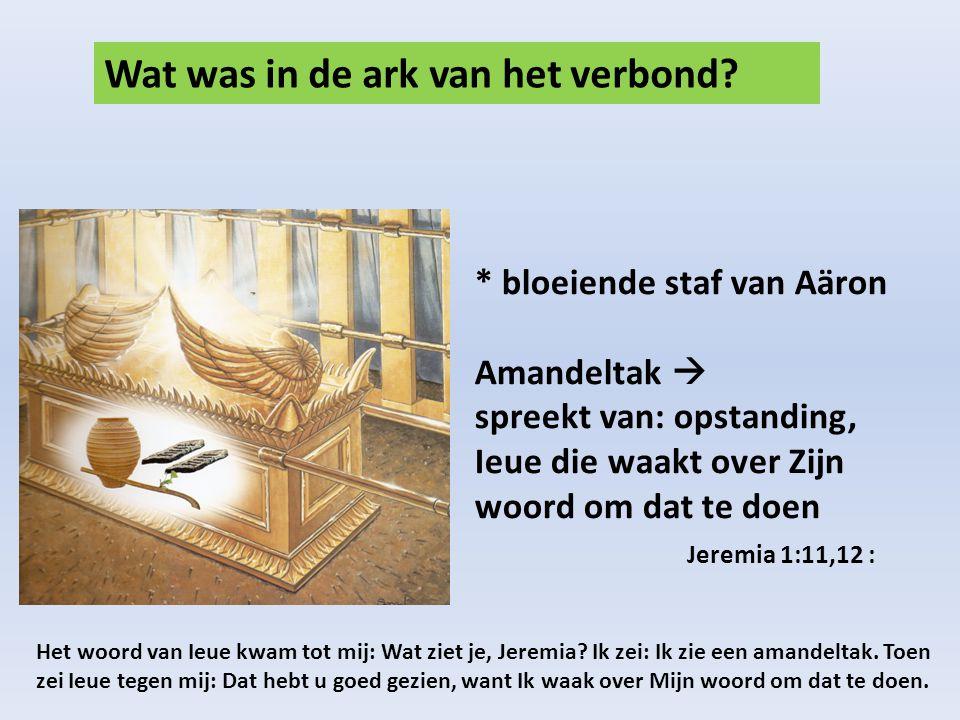 Wat was in de ark van het verbond.