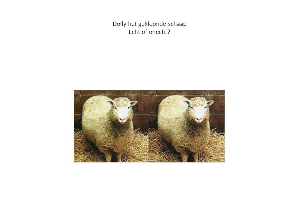 Dolly het gekloonde schaap Echt of onecht?