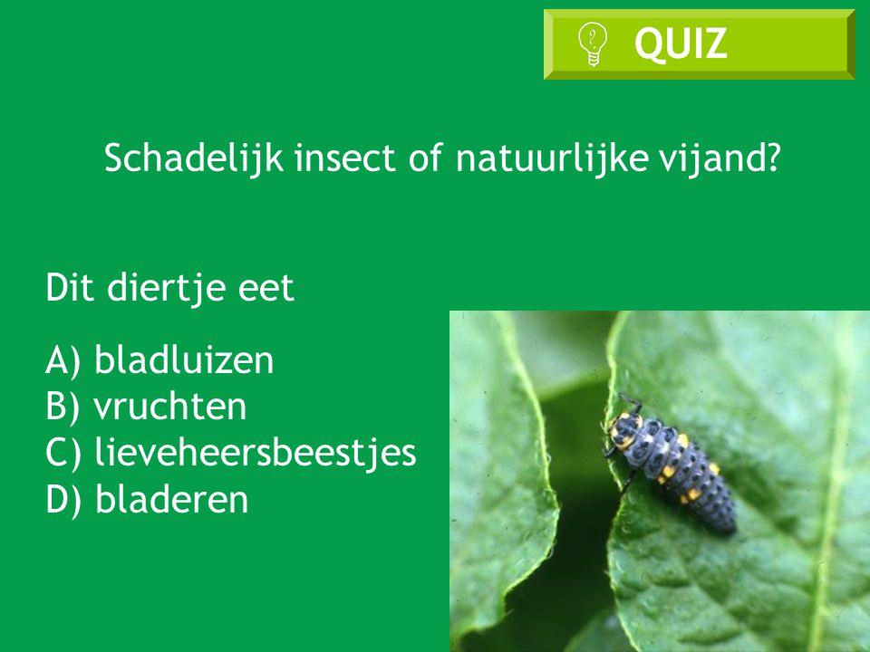 Schadelijk insect of natuurlijke vijand.