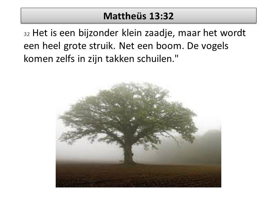 Mattheüs 13:32 32 Het is een bijzonder klein zaadje, maar het wordt een heel grote struik. Net een boom. De vogels komen zelfs in zijn takken schuilen