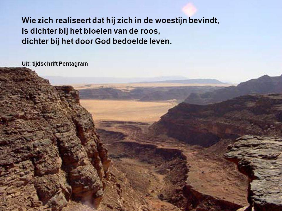 Wie zich realiseert dat hij zich in de woestijn bevindt, is dichter bij het bloeien van de roos, dichter bij het door God bedoelde leven. Uit: tijdsch