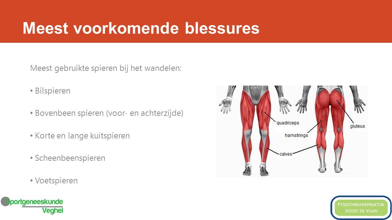 Meest voorkomende blessures Meest gebruikte spieren bij het wandelen: Bilspieren Bovenbeen spieren (voor- en achterzijde) Korte en lange kuitspieren Scheenbeenspieren Voetspieren