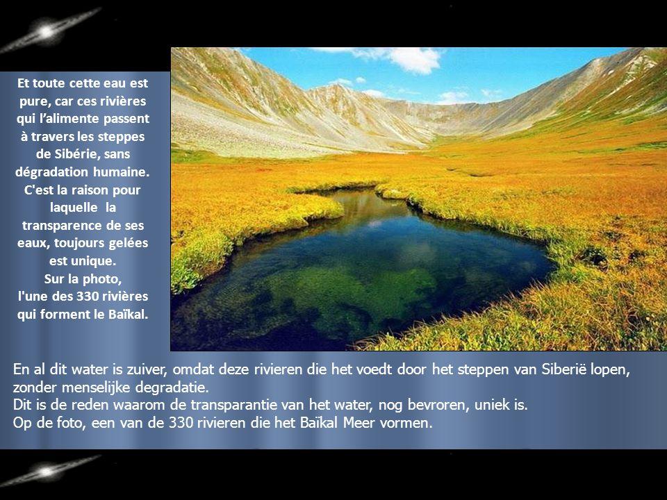 Et toute cette eau est pure, car ces rivières qui l'alimente passent à travers les steppes de Sibérie, sans dégradation humaine.