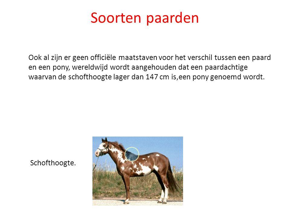 Soorten paarden Ook al zijn er geen officiële maatstaven voor het verschil tussen een paard en een pony, wereldwijd wordt aangehouden dat een paardach