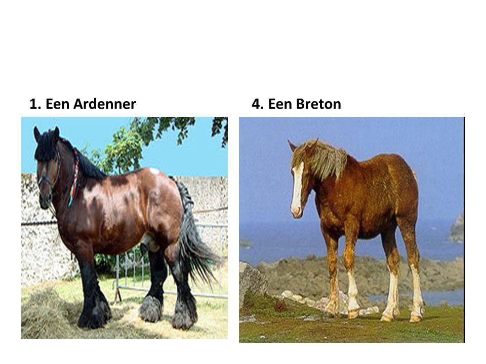 1. Een Ardenner4. Een Breton