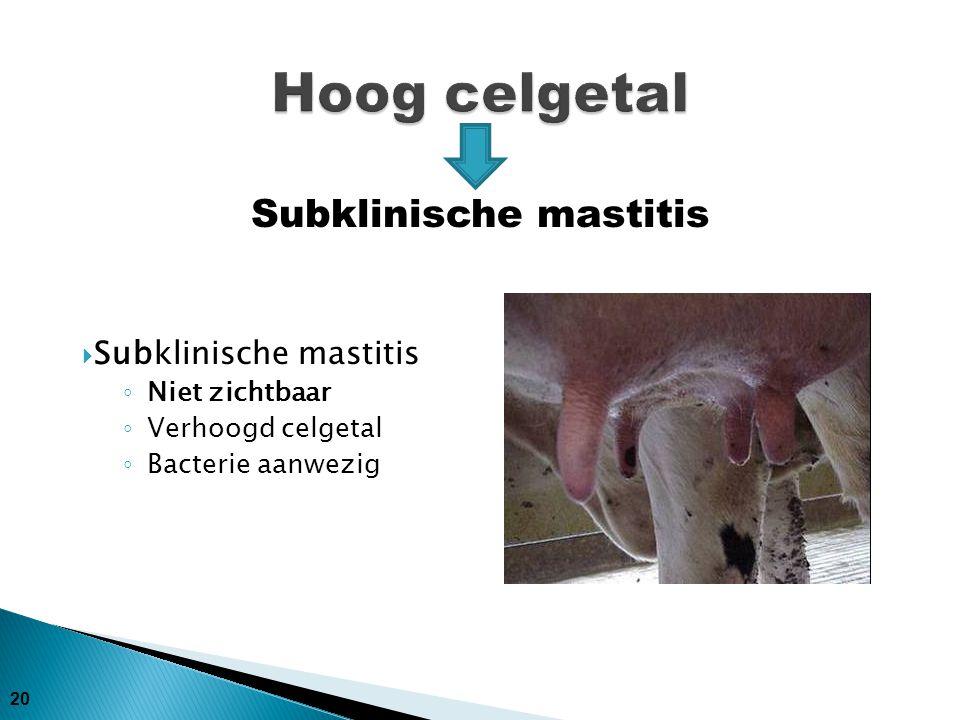 20  Subklinische mastitis ◦ Niet zichtbaar ◦ Verhoogd celgetal ◦ Bacterie aanwezig Subklinische mastitis