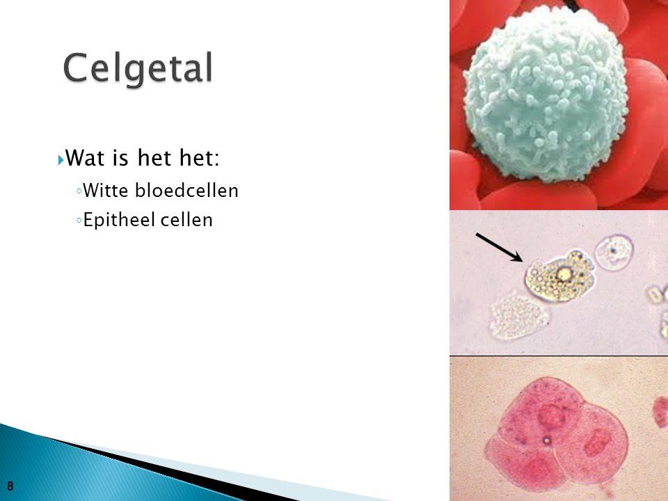 8  Wat is het het: ◦ Witte bloedcellen ◦ Epitheel cellen